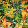 falling-skies-2010-oil-on-canvas-78x64in-jessica-siemens-bright-leaves-falling-from-the-sky.jpg