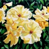 yellow-roses-oil-on-canvas-12x24inches-jessica-siemens-2013s