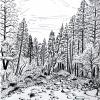 wawona-yosemite-pen-on-paper-11x14-jessica-siemens-2012_0