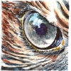 bird-eye-watercolor jessica siemens.jpg