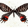 brown-and-red-butterfly-watercolor-4x6in-jessica-siemens-2010small.jpg