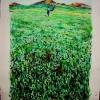 jose-grassy-field-watercolor-10x15-Jessica Siemens 2009.jpg