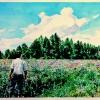 jose-in-a-field-of-clovers-watercolor-18x24in-jessica-siemens-2012s