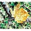 spotted-leaf-oregon-hike-watercolor-jessica-siemens-2010small.jpg